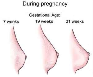 cambios_en_los_pechos_durante_el_embarazo