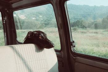 En vacaciones…¿Qué hacemos con nuestras mascotas?
